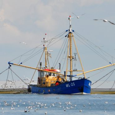 Vissen op de Waddenzee. FOTO: Herman Verheij