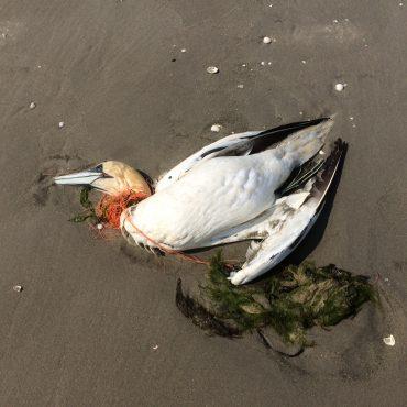 Jan van Gent, Plastic, dood dier, Werelderfgoed Waddenzee, Waddenunit