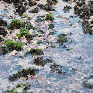 Zeesterren, Mossel, Waddenzee