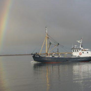 Garnalenvisser vaart richting Waddenzee FOTO: Ronald Lanters