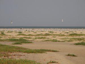 Miguel Lecoq - Saloum, Senegal