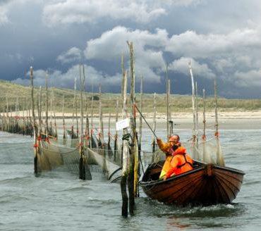 waddenzee-vis-fuik-Koninklijk-Nederlands-Instituut-voor-Onderzoek-der-Zee
