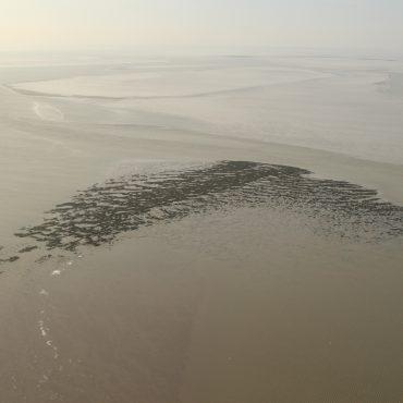 Mosselbank Waddenzee FOTO: Beeldbank Rijkswaterstaat