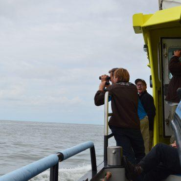 Wadvogeltelling in Werelderfgoed Waddenzee vanaf de Waddenunit