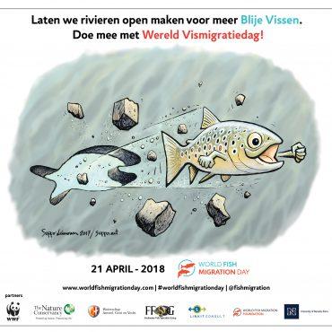 Wereldvismigratiedag 2018. Ook in het Waddengebied zijn mooie activiteiten.