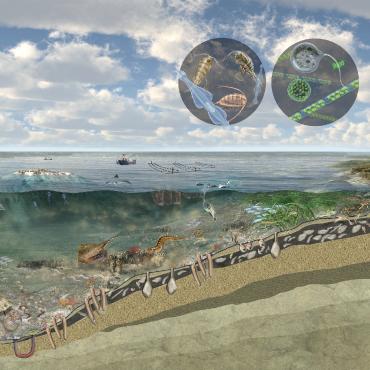 Online Onderwatercafés - Voedselweb Waddenzee