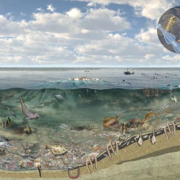 Onderwaternatuur Waddenzee