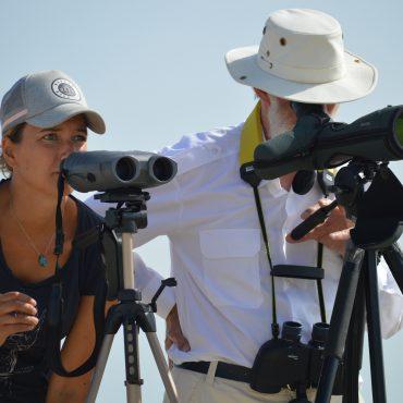 Monitoringsonderzoek naar zeehonden in de Waddenzee bij Engelschhoek tussen Vliealand en Terschelling