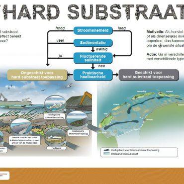 Praatplaat over de Waddenzee. Hebben we harde structuren nodig of moeten we juist niets doen?
