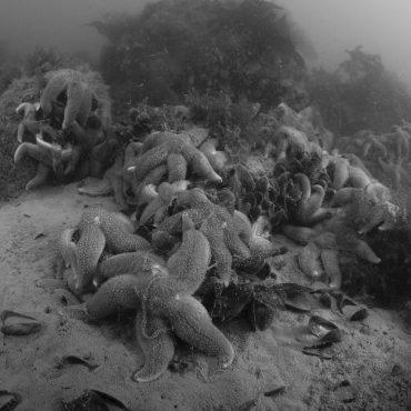 onderwwaternatuur - foto Ruben Smit Productions