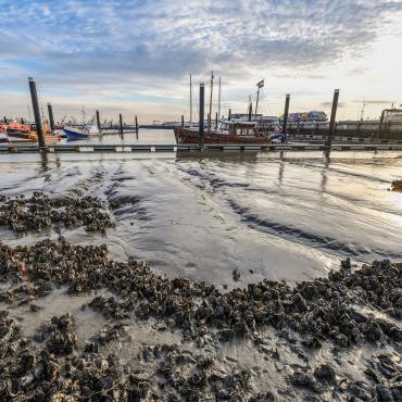 50 jaar Lauwersmeer herhaling