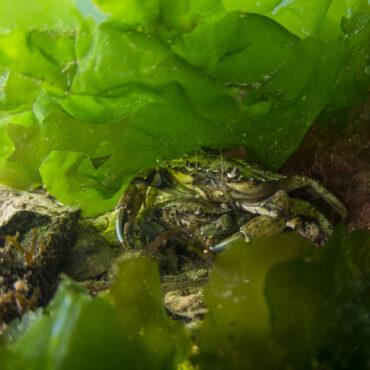 Natuur onderwater Waddenzee Ruben Smit Productions